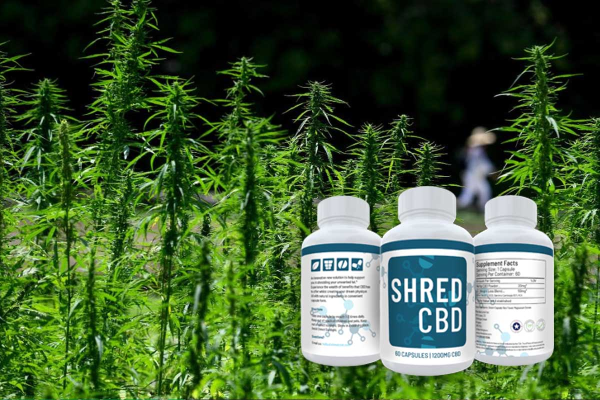 Shred CBD product in front of plants