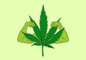 cannabis leaf with muscles