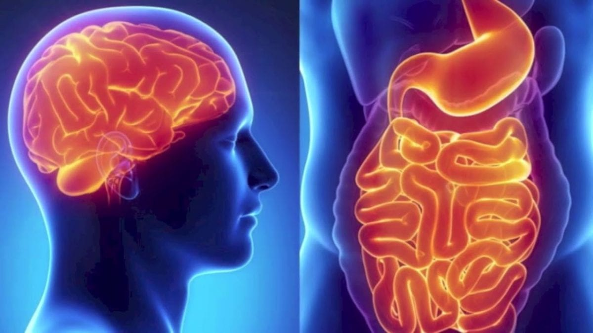 illustration of the human brain and gut