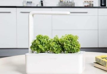 herb garden growing
