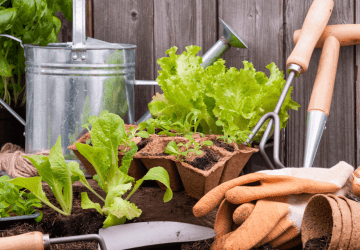 a garden with healthy vegetables