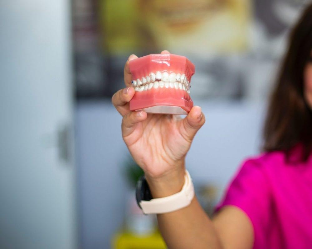 a dentist holding a model of teeth